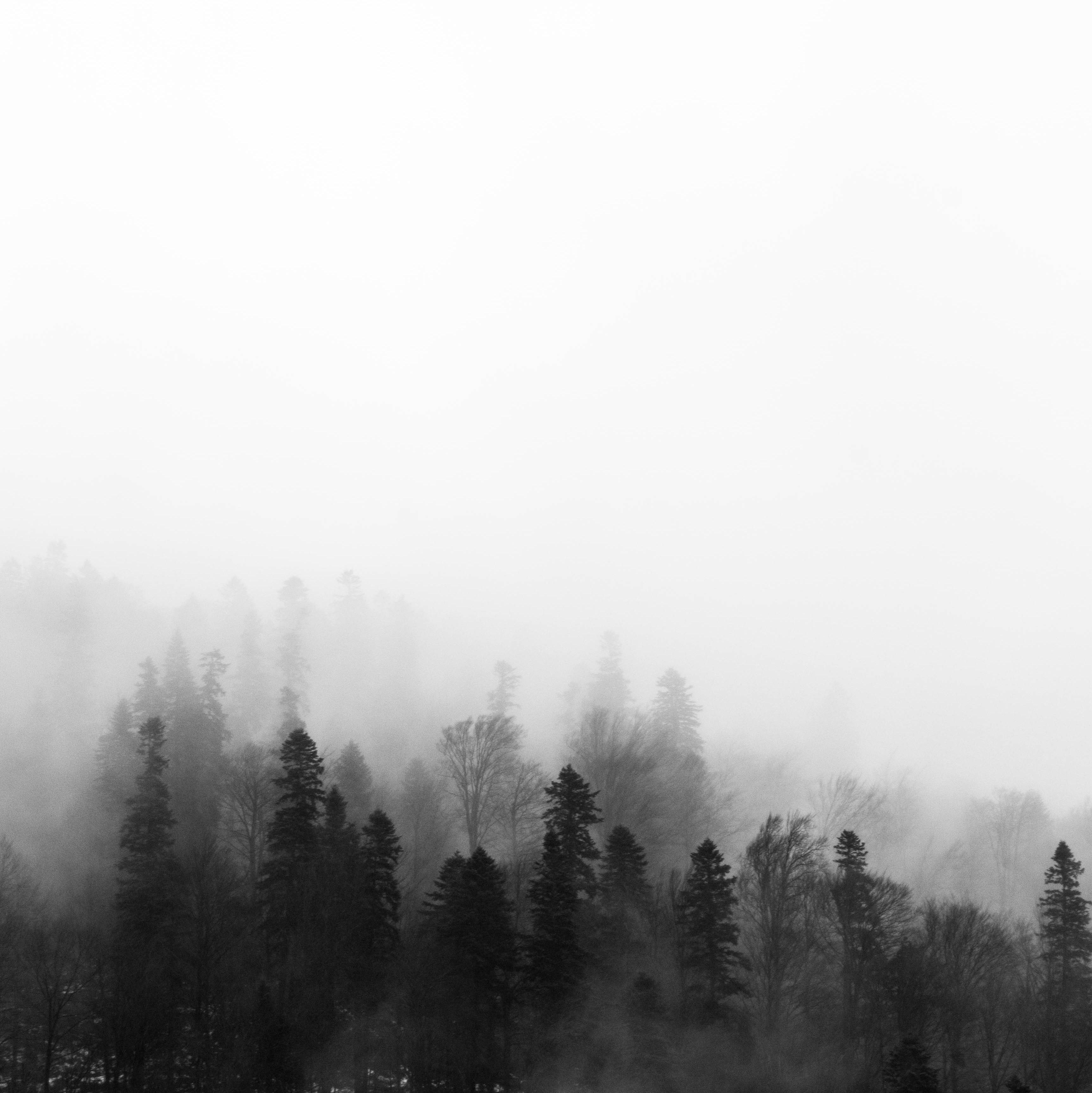 trees-1061623