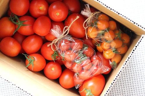 北海道余市産 トマト詰め合わせ