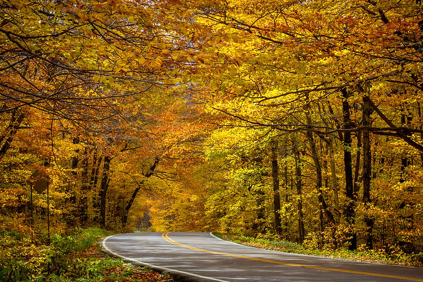 Road of Gold