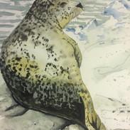 Harbor Seal.JPG