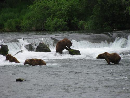 Katmai National Park Bears.JPG