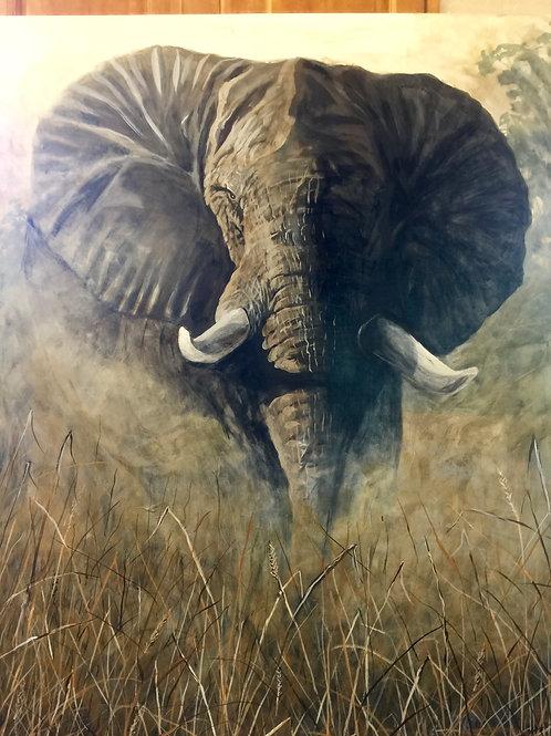 Canvas Print - Elephant