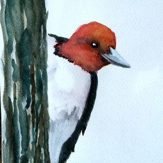 Amalga Woodpecker.JPG
