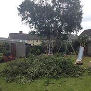 tree pruning 2.jpg