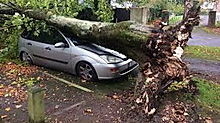 fallen tree 4.jpg