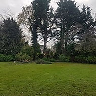 large tree removal before
