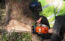 tree removal gob.jpg