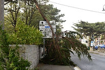 fallen tree 2.jpg