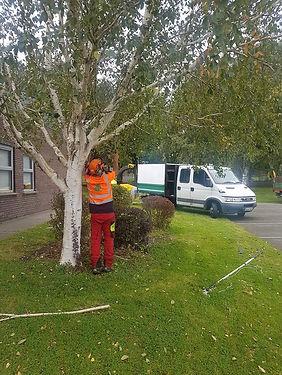 Tower Tree Service