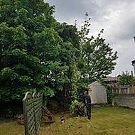 tree pruning 4.jpg