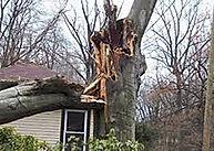 treedecay 3.jpg