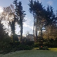 Large Tree Removal after
