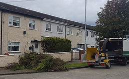 hedge removal.jpg