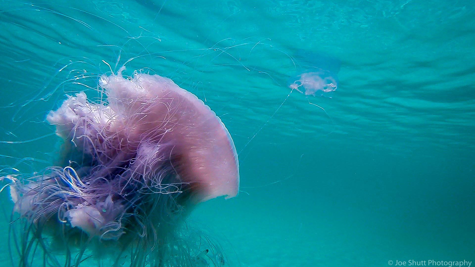 Jellyfish_2016-79