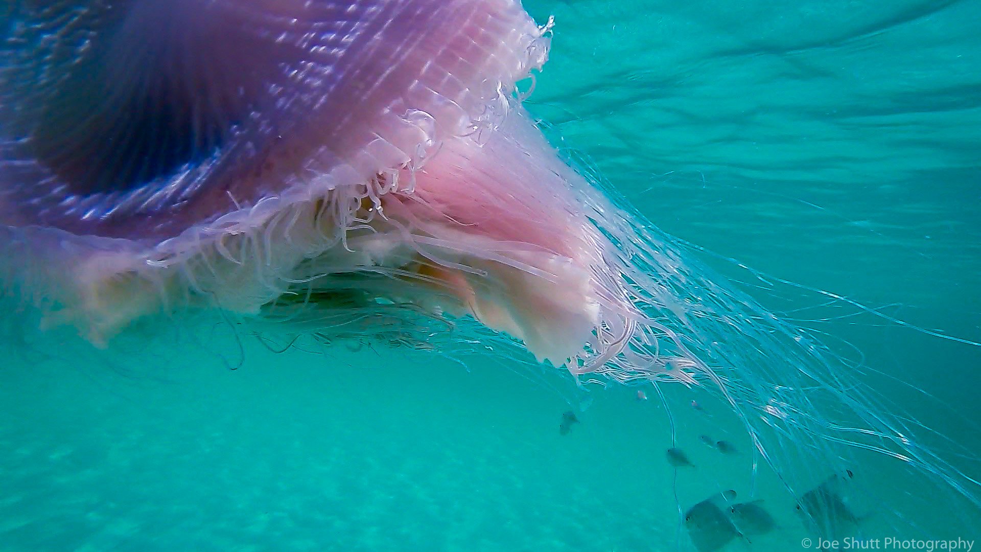 Jellyfish_2016-56