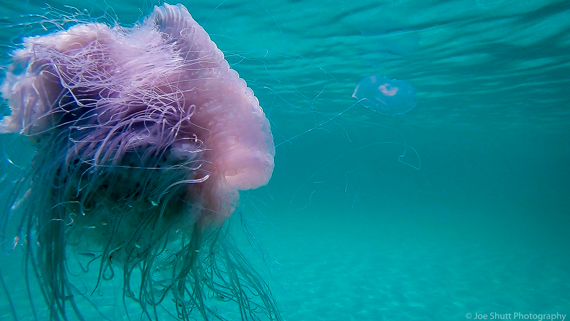 Jellyfish_2016-75