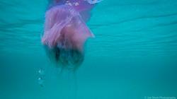 Jellyfish_2016-50
