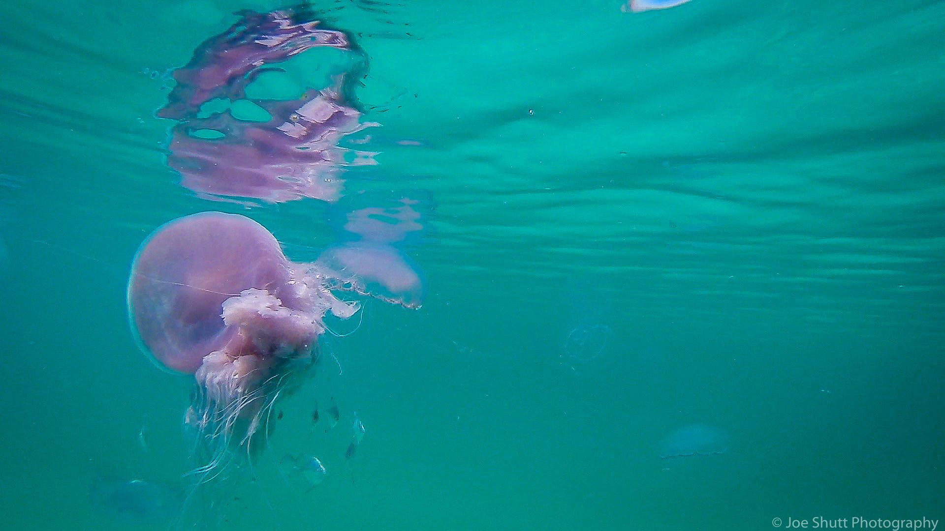 Jellyfish_2016-90