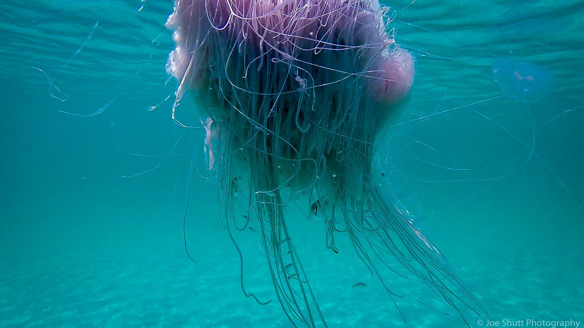 Jellyfish_2016-71