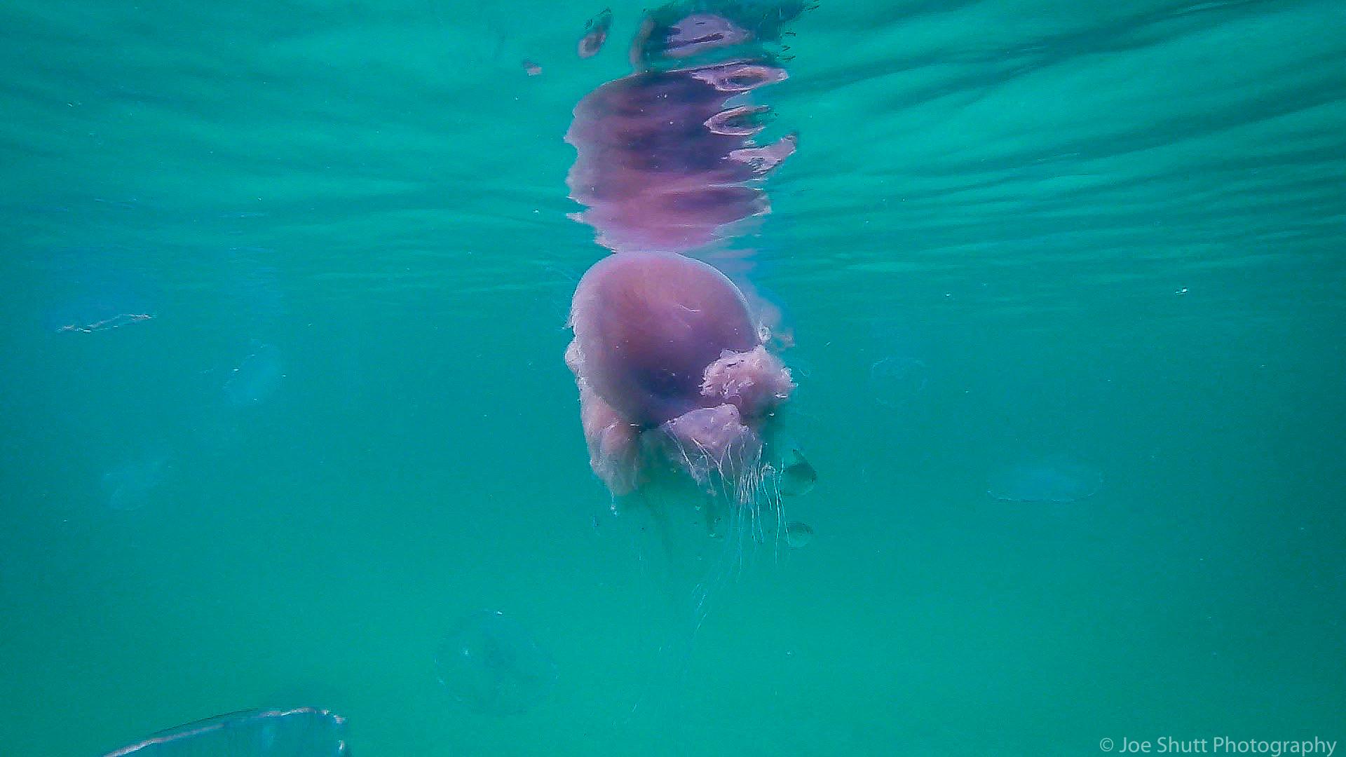 Jellyfish_2016-91