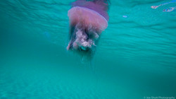 Jellyfish_2016-68