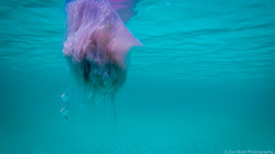 Jellyfish_2016-44