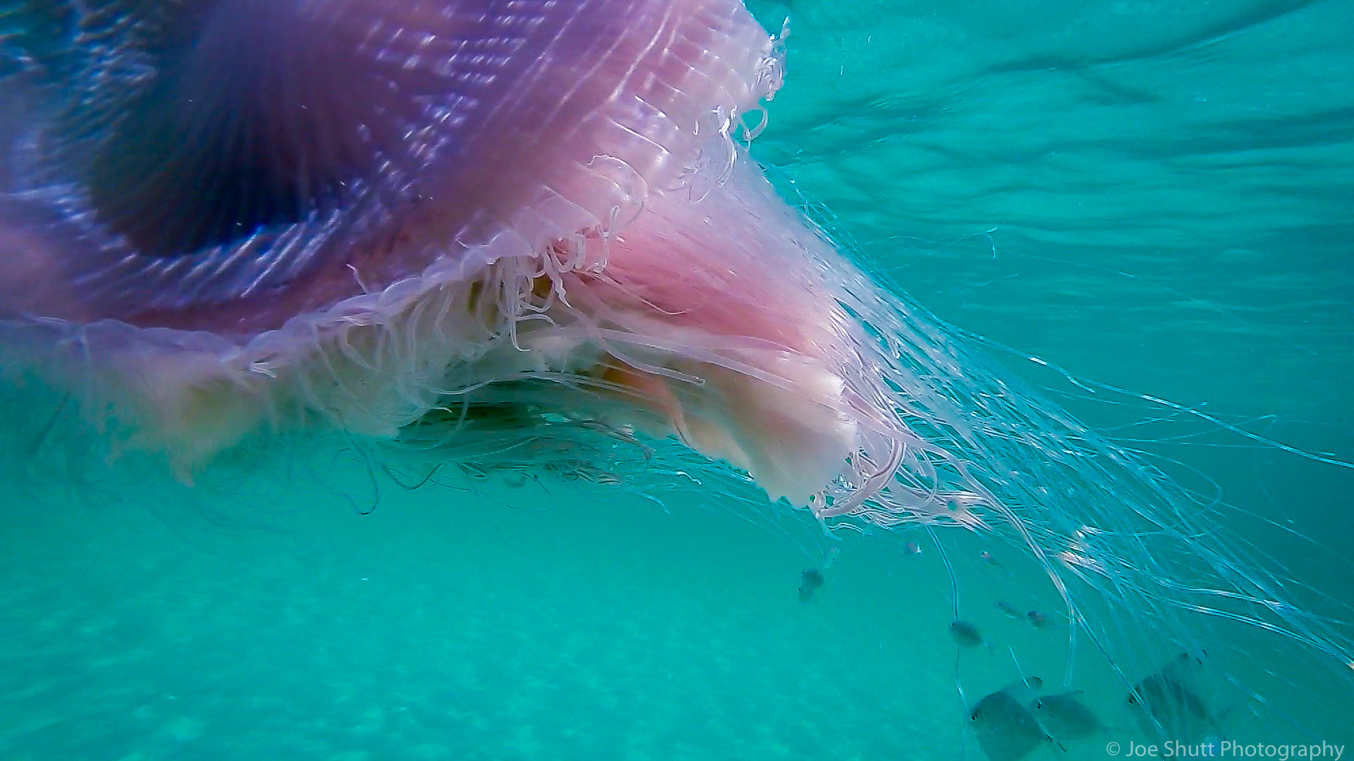 Jellyfish_2016-60