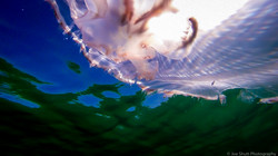 Jellyfish_2016-151