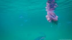 Jellyfish_2016-93