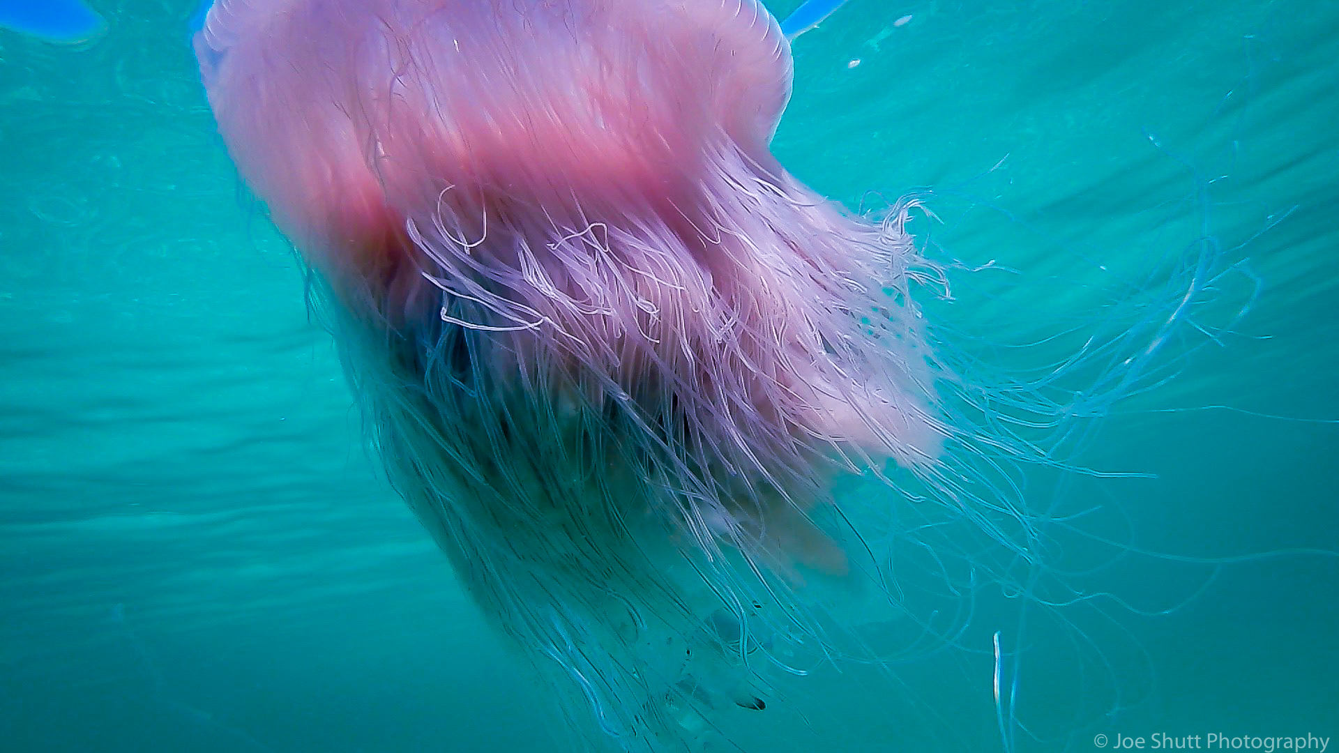 Jellyfish_2016-3