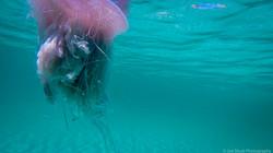 Jellyfish_2016-70
