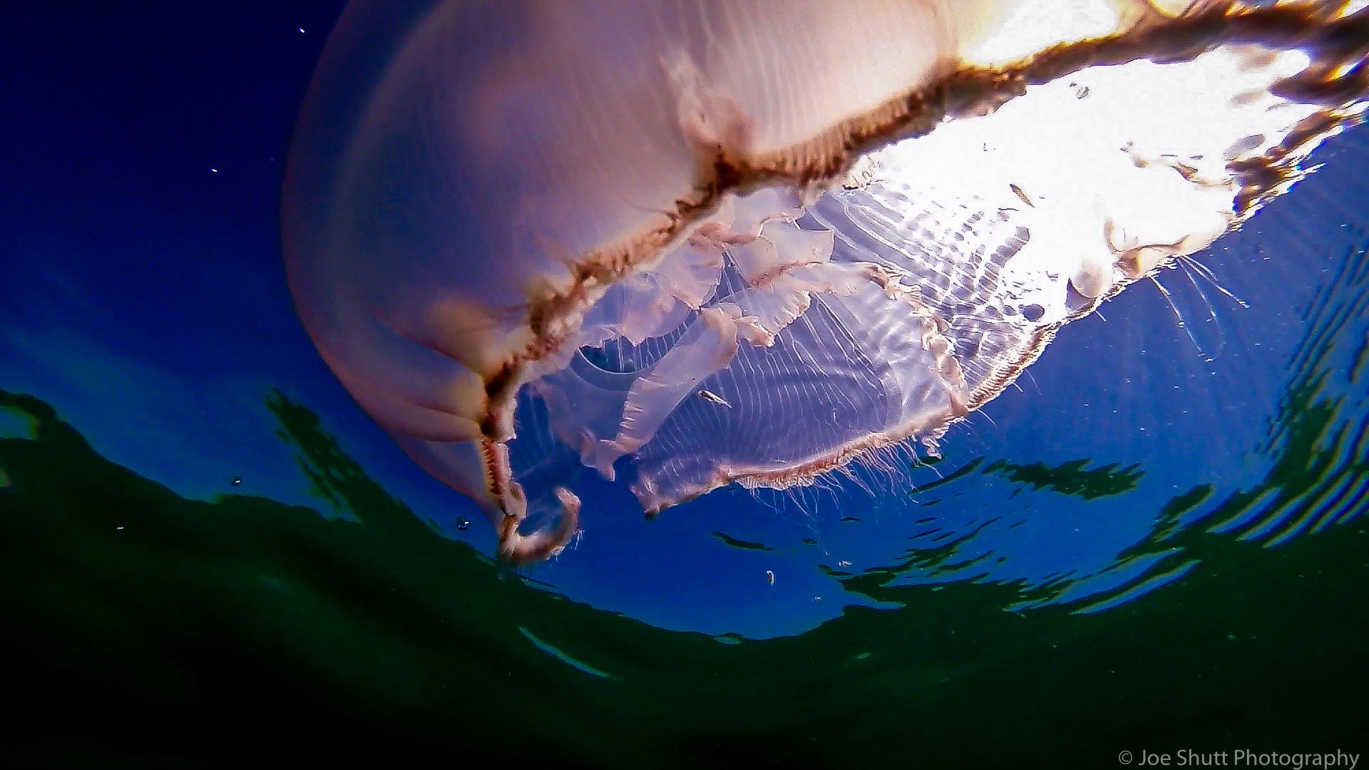 Jellyfish_2016-160