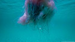 Jellyfish_2016-43