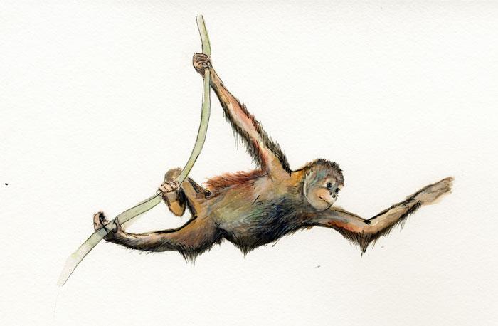 Orang Utan Swing