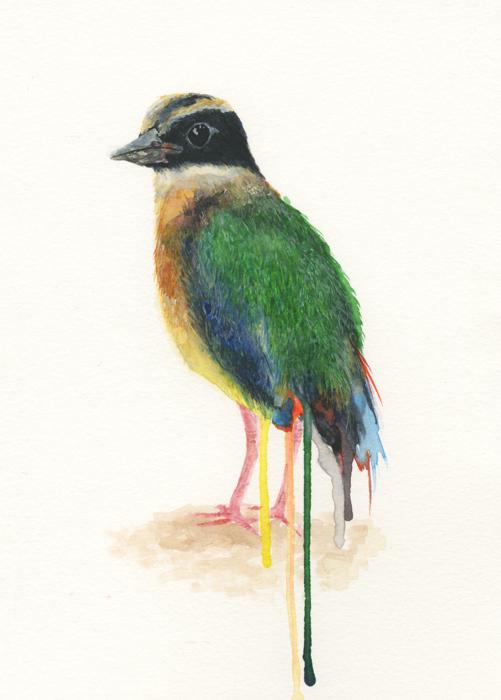 Pitta Bird (2014).jpeg