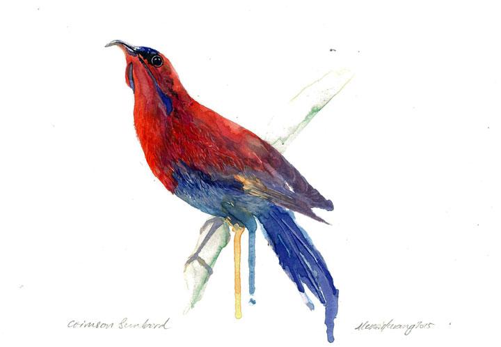 Crimson Sunbird (2015)