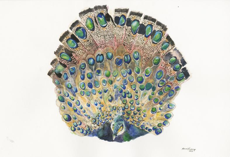 Borneo Peacock (2014).jpeg
