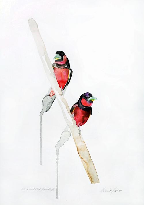 Black and Red Broadbills (2015)