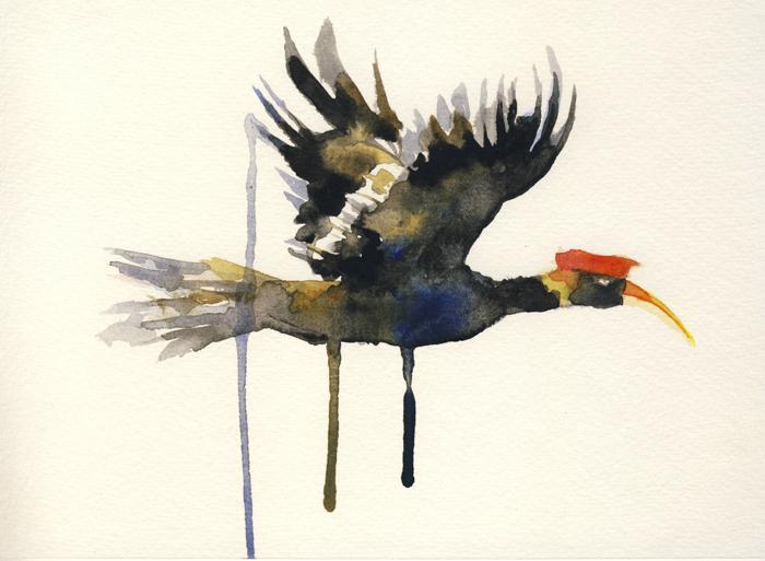 Flying Hornbill (2014).JPG