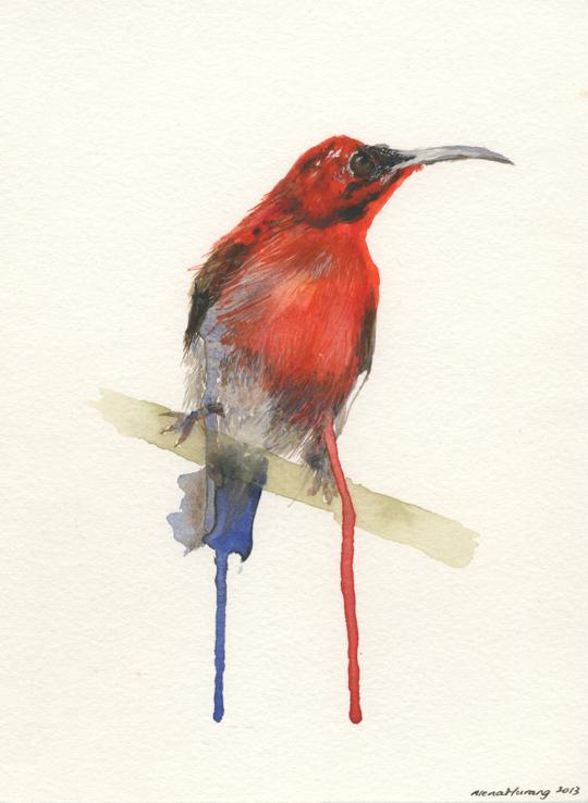 Red Sunbird (2013).jpeg