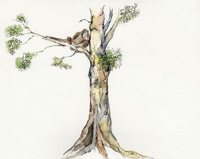 Orang Utan Tree