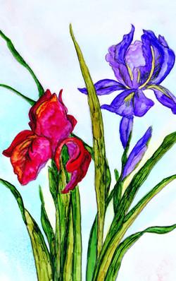 The First Iris