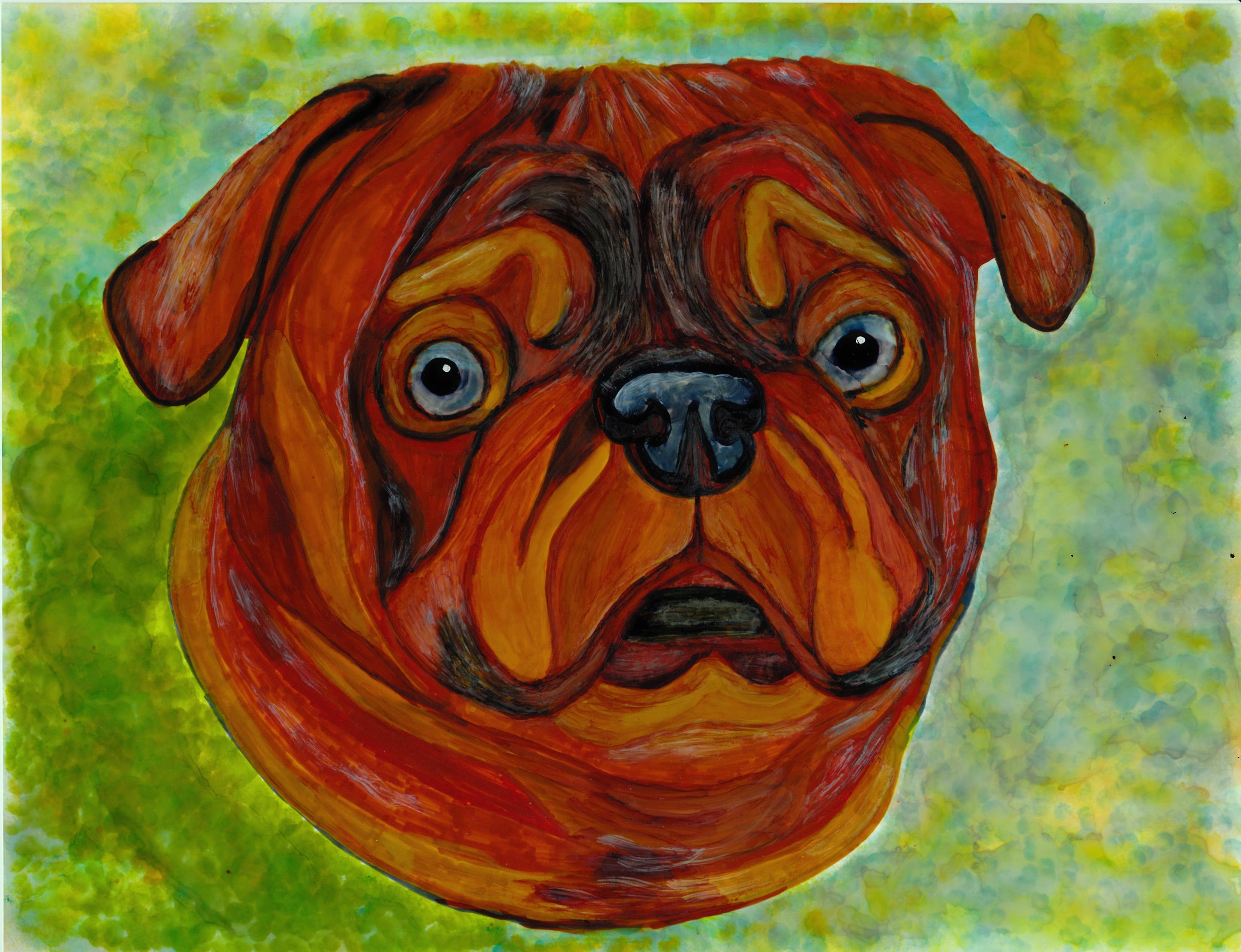 Frank's Pug