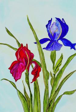 The Second Iris