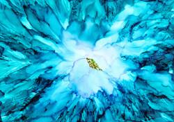 Burst of Blue Bloom