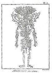 Anatomie- les artères-XVIIème