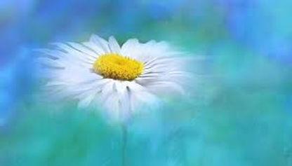 fleurs8.jpg