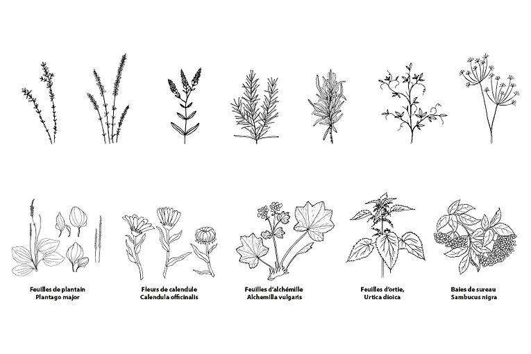 Floramedicina_2.jpg