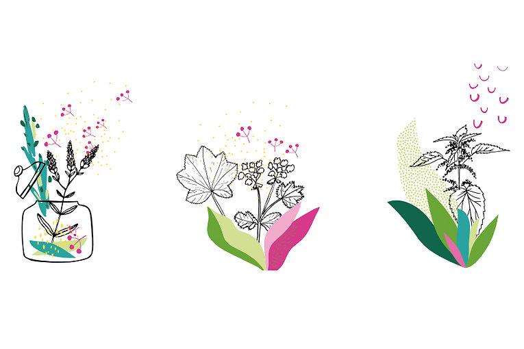 Floramedicina_5.jpg