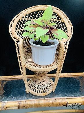 Vintage rotan mini pauwstoel 2